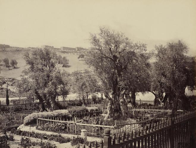 Garden of Gethsemane [Jerusalem]