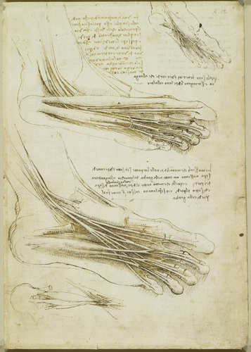 Recto: The muscles and tendons of the sole of the foot. Verso: The muscles of the lower leg