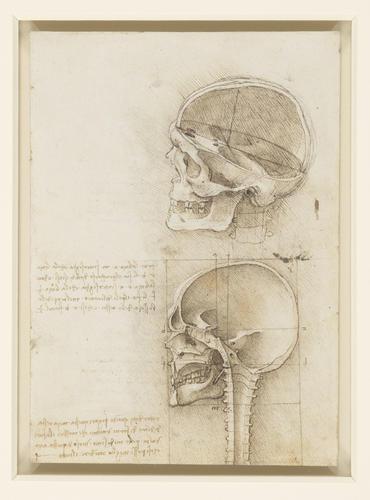 Recto: El cráneo seccionado.  Verso: El cráneo.