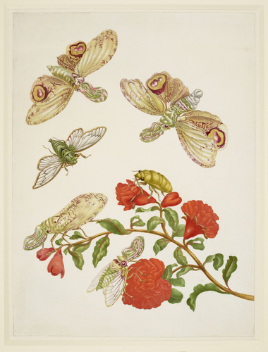 Branch of Pomegranate with Lanternfly and Cicada