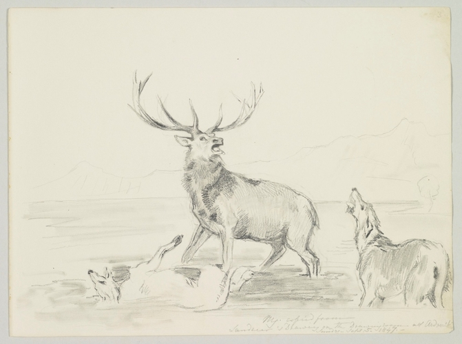 Master: SKETCHES FROM NATURE V. R. 1847 TO 1852 Item: Copied from Landseer's drawing on the Dining room at Ardverikie