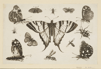 A print of a swallow-tail butterfly surrounded by other insects. This is one of a series of prints of butterflies andmoths made by Hollar in Antwerp and published as Diversae Insectorum (Diverse Insects).