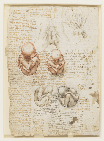 Recto: Drawings of external female genitalia; supposed arrangement of abdominal muscles; 2 drawings of foetuses; L side of a foetus, indicating uterus; a small sketch of a foetus in uterine position; notes on the drawings. Verso: Sections of the umbilical
