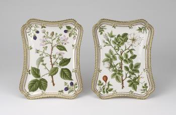 Master: Flora Danica Tray Item: Rubus discolor. W