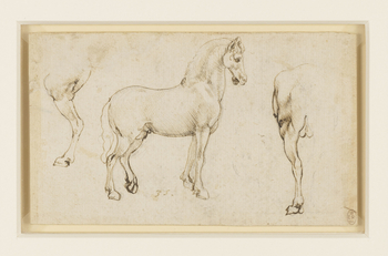 A study of the near hind-leg of a horse, in profile to the left; a horse, standing, full length, in profile to the right; the hind-quarters of a horse, and a very faint sketch of the hock of a horse. Melzi's number 35. This is one of several studies