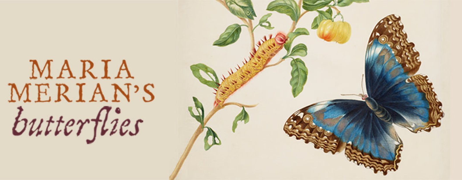 Banner for Maria Merian exhibition