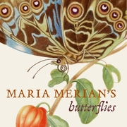 Cover jacket of Maria Merian's Butterflies