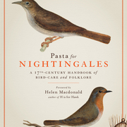 Pasta for Nightingales cover