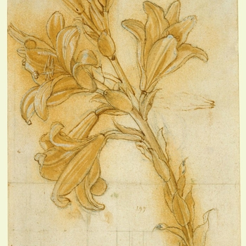This drawing depicts a lily (Lilium candidum L.), a symbol of purity in depictions of the Virgin. The technique is unusually elaborate, and the outlines of the lower part of the lily were pricked through with a needle, to transfer the design to another su