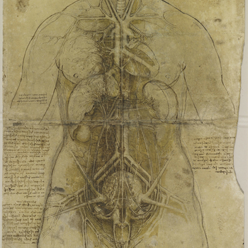An anatomical study of the principal organs and the arterial system of a female torso, pricked for transfer.  Leonardo's only documented dissection was carried out in the winter of 1507-8, when he performed an autopsy on an old man whose death