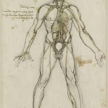 A study of a man standing facing the spectator, with legs apart and arms stretched down, drawn as an anatomical figure to show the heart, lungs and main arteries. In the mid-1480s Leonardo began to study anatomy, initially towards a proposed treatise on p