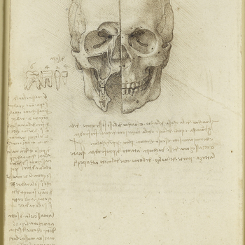 A drawing of a skull viewed obliquely from above and the left, which shows the intracranial nerves and vessels. With notes below on the importance of the cranium as the seat of all nervous activities, in Leonardo's