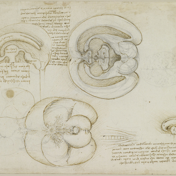On this sheet Leonardo records an ingenious experiment in which he injected molten wax into the brain to determine the shape of its internal cavities. The drawing at upper centre shows the brain cut in half through the mid-line and ope