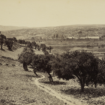 View from slopes and olive groves of the Mount of Olives towards distant rooftops of Jerusalem. 