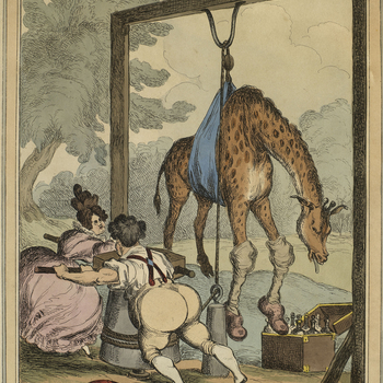 Etching with hand-colouring of George IV and his mistress Lady Conyngham, hoisting an ailinggiraffe suspended in a sling. George IV is depictedstripped down to his shirt with rolled sleeves, braces, and breeches, and with his jacket discarded