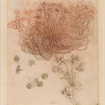 The focus ofthis drawingis a clump of star-of-Bethlehem (<em>Ornithogalum umbellatum</em> L.), whose swirling leaves are seen in the studies for the kneeling Leda and in most copies of the painting, where it softens the edge of the rock on whi