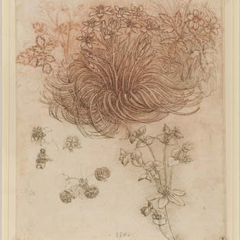 The focus of this drawing is a clump of star-of-Bethlehem (Ornithogalum umbellatum L.), whose swirling leaves are seen in the studies for the kneeling Leda and in most copies of the painting, where it softens the edge of the rock on which the sw
