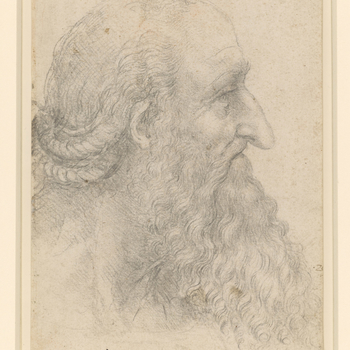 A drawing of the head of an old man, in profile to the right. He has a long pointed nose, a long flowing curly beard and moustache, and hair that seems to be twisted into two plaits. Melzi's number 29.   The profile here is that of Leonardo's u