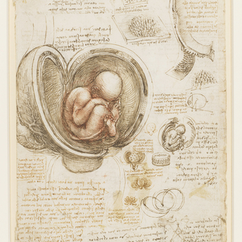 Recto: a large drawing of an embryo within a human uterus with a cow's placenta; a smaller sketch of the same; notes on the subject; illustrative drawings in detail of the placenta and uterus; a diagram demonstrating binocular vision; a note on relie