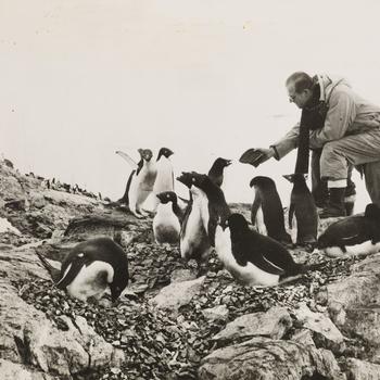 HRH The Duke of Edinburgh with penguins, ?South Georgia