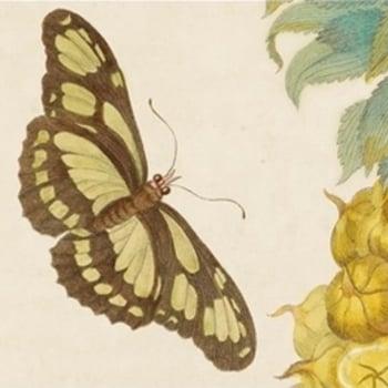 Very happy butterflies