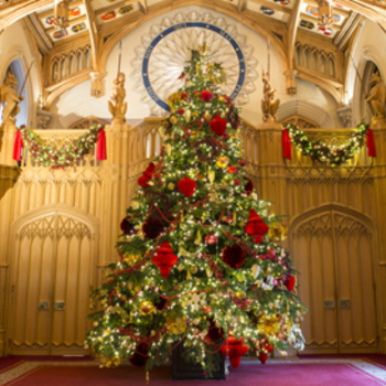 Nordmann Fir Christmas trees in St George's Hall