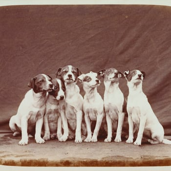 Photograph of some of Queen Victoria's pet dogs, all small terriers. They are sitting in a line with a cloth draped behind.<br /><br />The dogs are Wat, Dot, Teazer, Slip, Fly and Nip. Details about their paternity are recorded in the album.