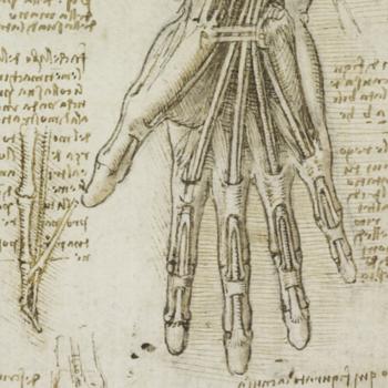 drawing of hands by Leonardo da Vinci