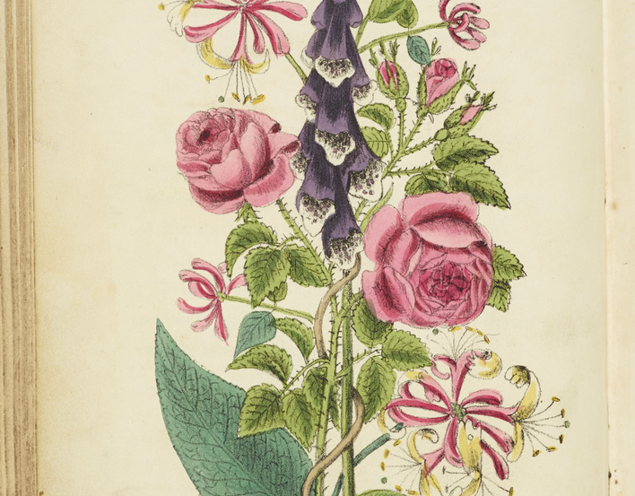 The return of Lady Mary Wortley Montague (1689-1762) in 1718 from her travels in the Ottoman Empire introduced European society to a hitherto unknown world of floral communication. Although Lady Mary's assumptions that within the Sultan's harem, every flo