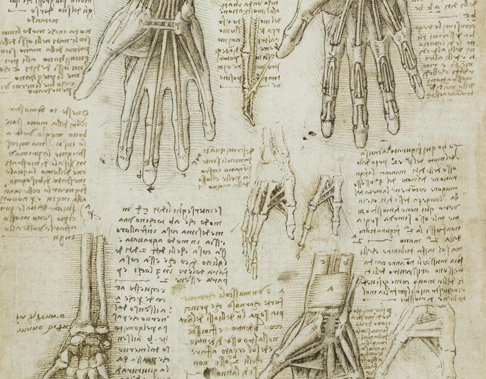 drawing of bones, muscles and tendons of the hand