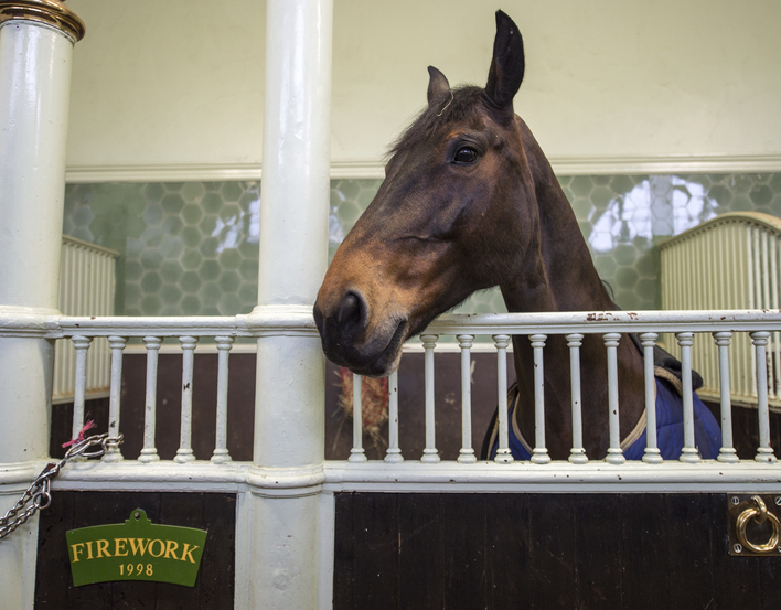 Horse in a stable at the Royal Mews