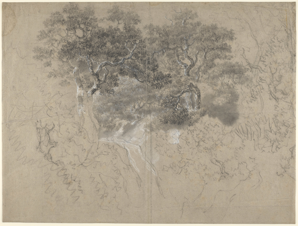 Adrawing in black and white chalk and stumpof trees and undergrowth,and a path or waterfall at the centre.Trees at centre moreworked up. Drying fold at centre of sheet. This drawing is one of 25 landscape drawings in the Roy