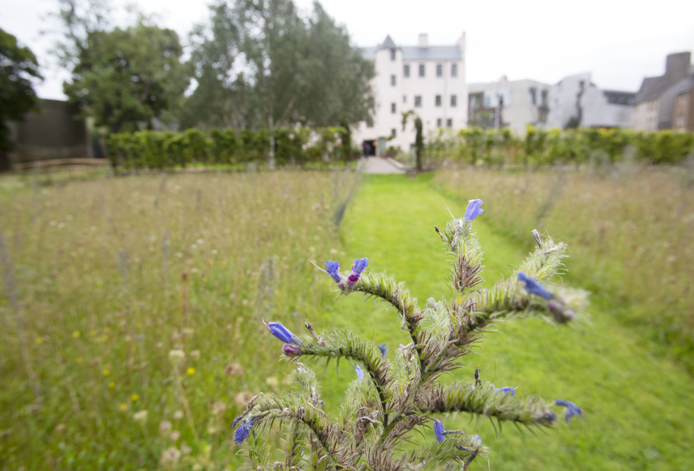 Physic Garden at the Palace of Holyroodhouse