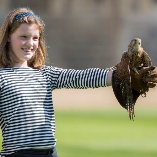 Girl demonstrating falconry